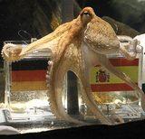 Paul Psychic Octopus